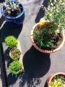 Urban garden DIY Ana's Bananas blog